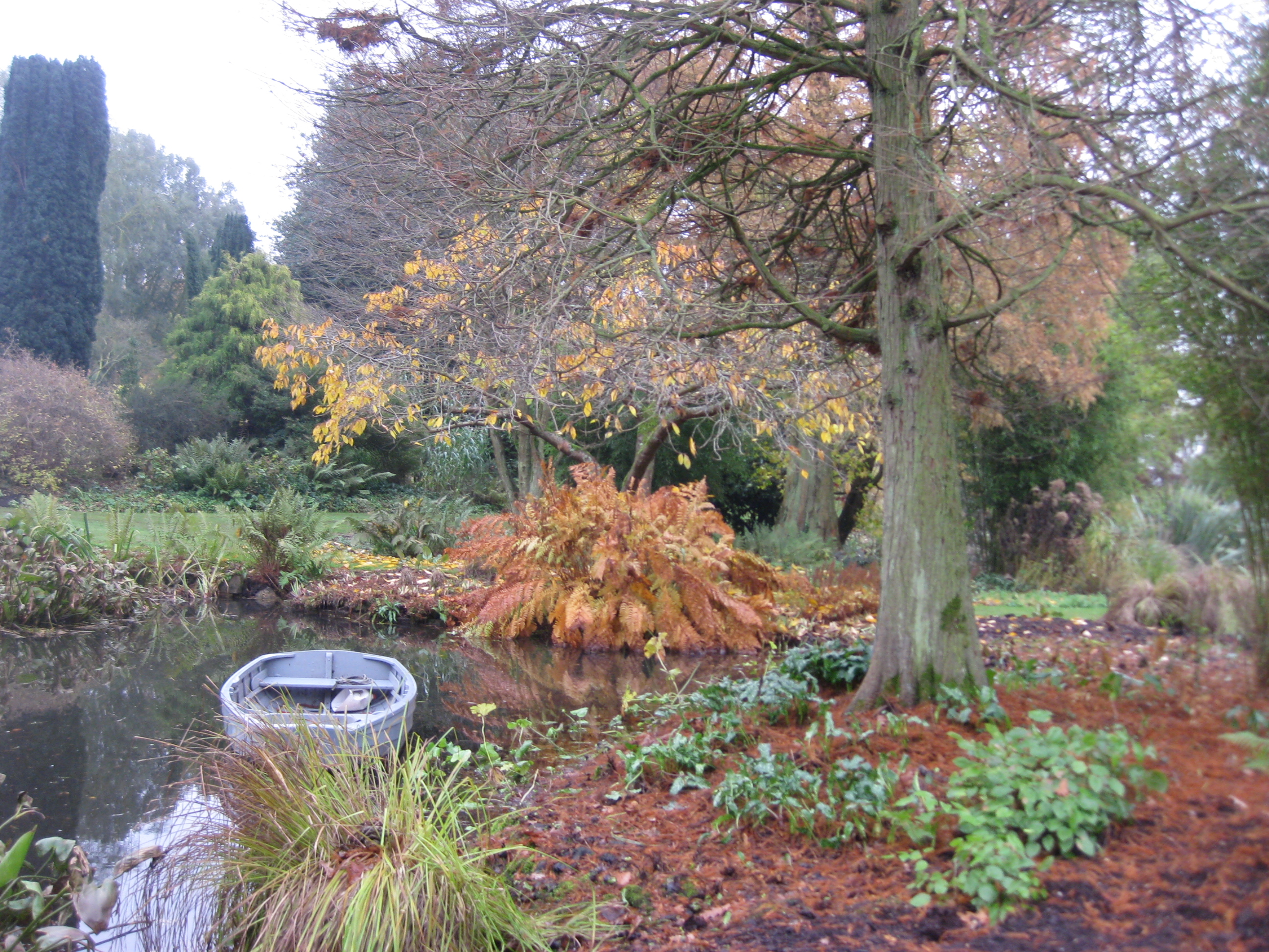 a late autumn visit to beth chatto u0027s garden the blooming garden