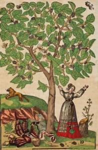 Boch mulberry