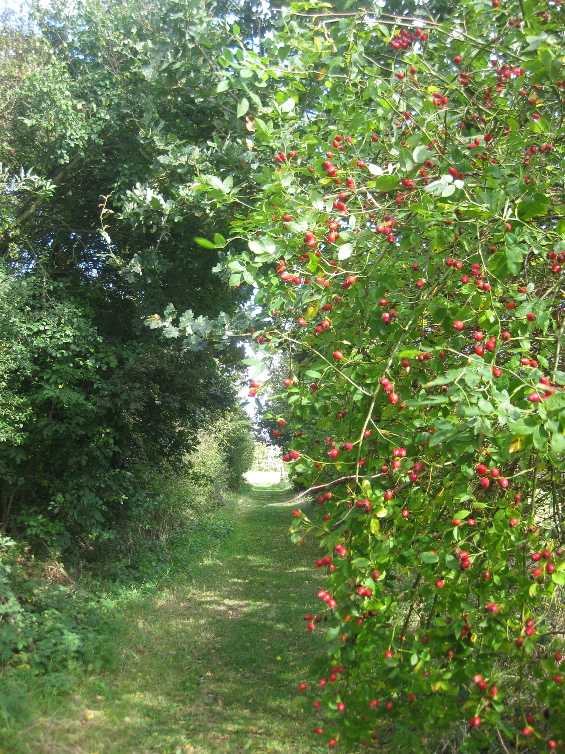 the mulberry tree october 2014 the blooming garden
