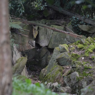 Remains of the fern grotto