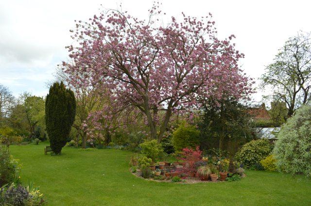 Frilly Knicker Tree