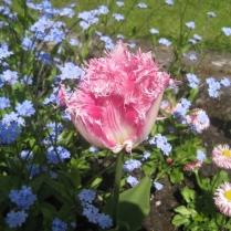 Tulip Huis Ten Bosch'