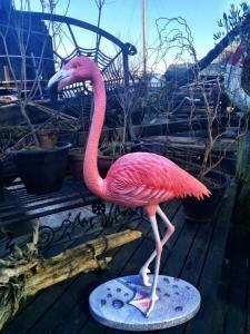 10959652_772607162825298_2895451210362905420_n.jpg flamingo
