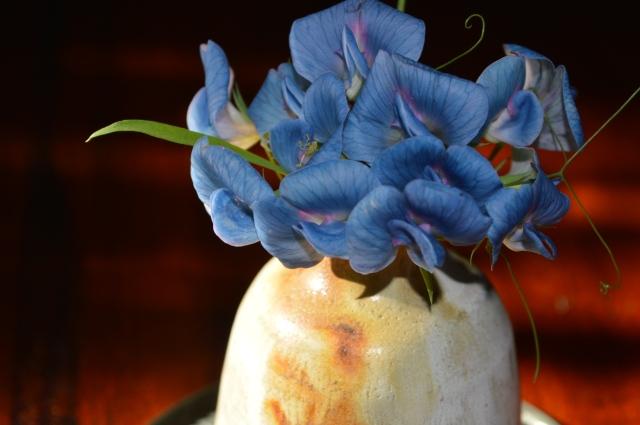 Lathyrus sativus var.azureus