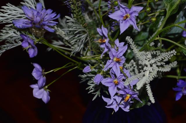 Solanum crispum