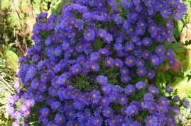 S. 'Purple Dome'