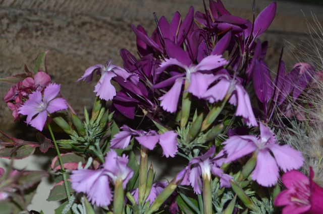 Dianthus rupicola and Cleome spinosa