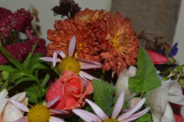 Chrysanthemum 'Chelsea Physic Garden'