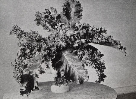 Kale. Constance spry