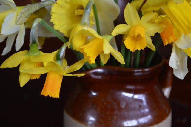 Narcissus 'Tete-a-tete